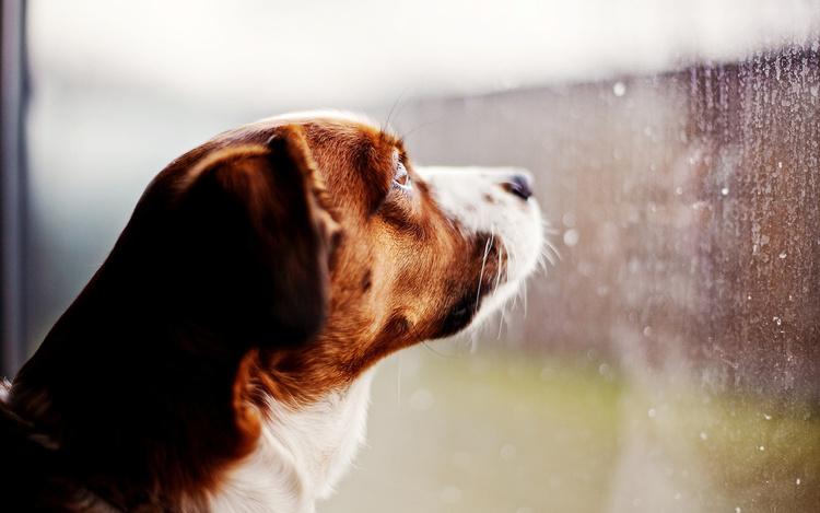 cane pioggia temporale
