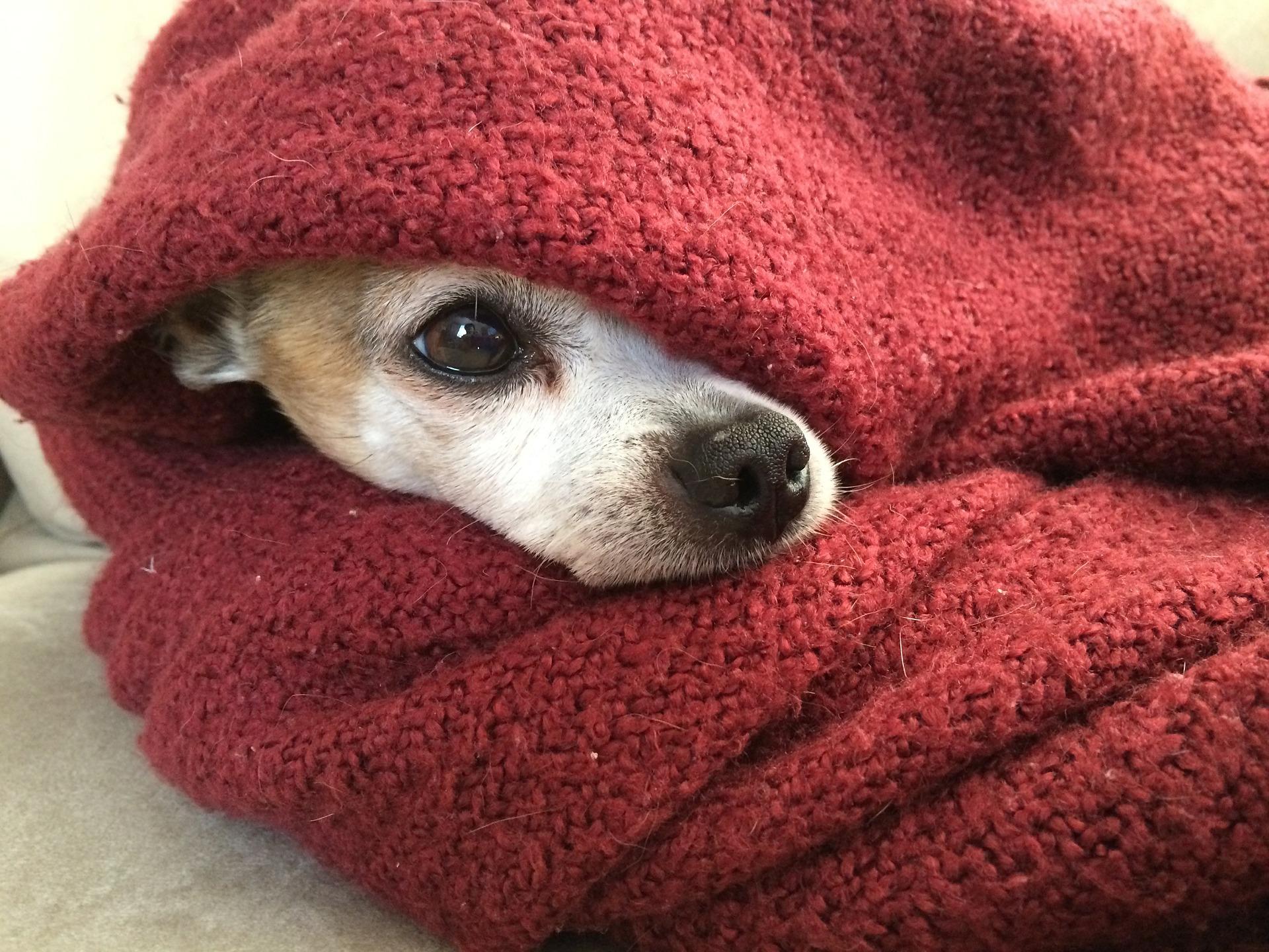 cane che ha paura del temporale