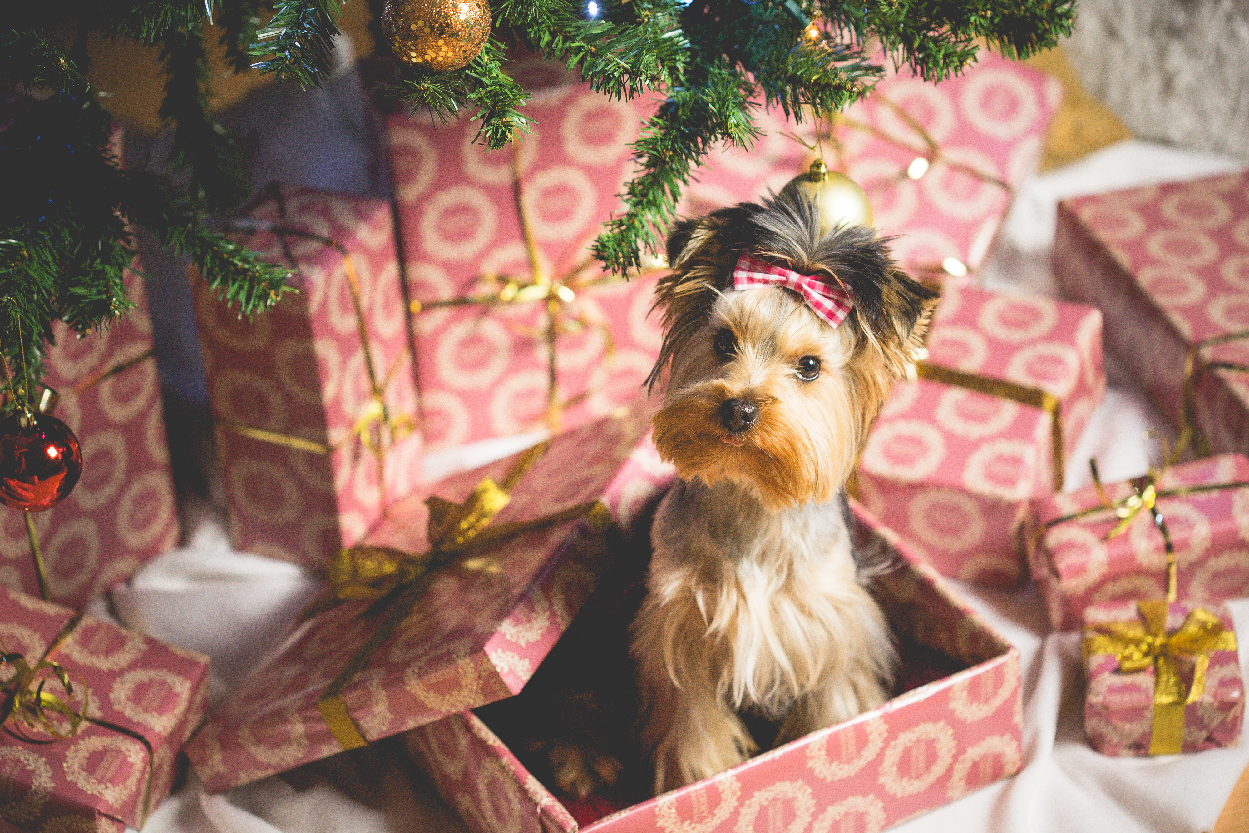 cane natale regali