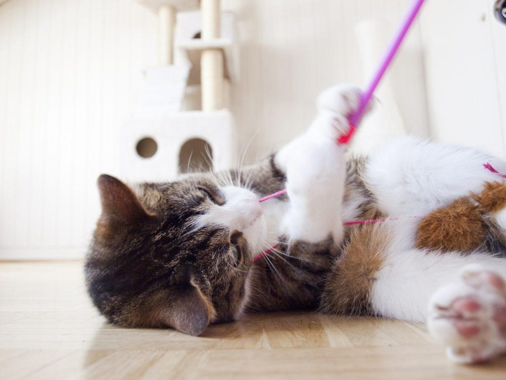 gatto gioco