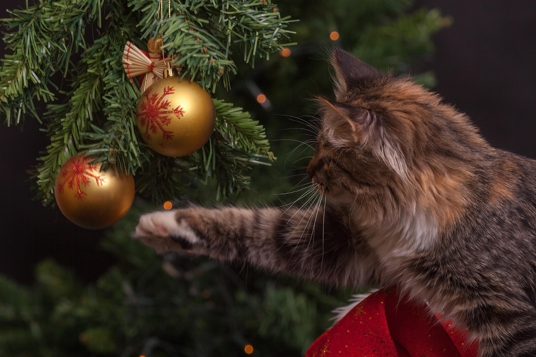 regalo gatto natale