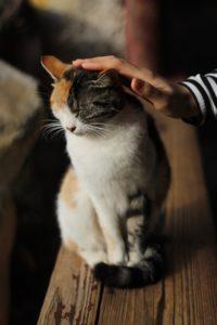 Il Gatto Perde Il Pelo Ecco Perché E Come Fare Life Petcare